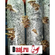 Зерновой мицелий штамп  ER2