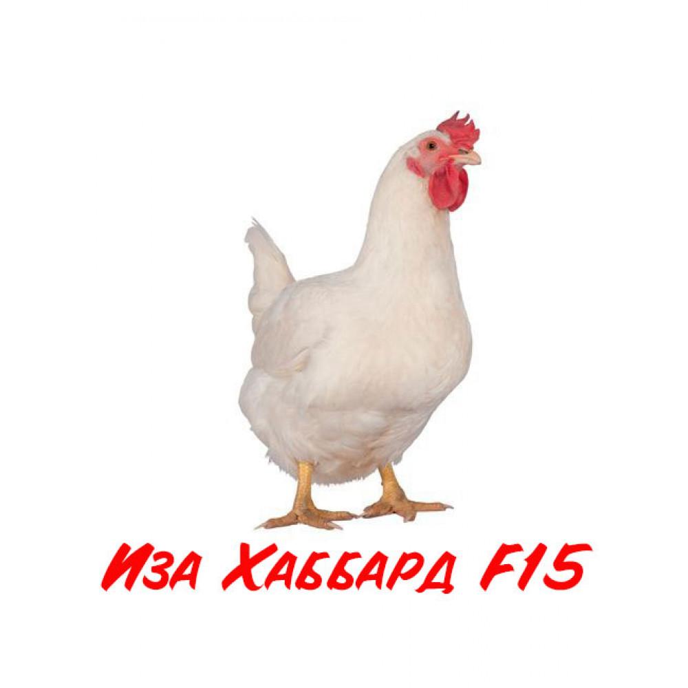 Купить Инкубационное яйцо  Бройлер Иза Хаббард F15