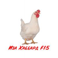Бройлер Иза Хаббард F15