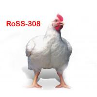Бройлер Росс 308