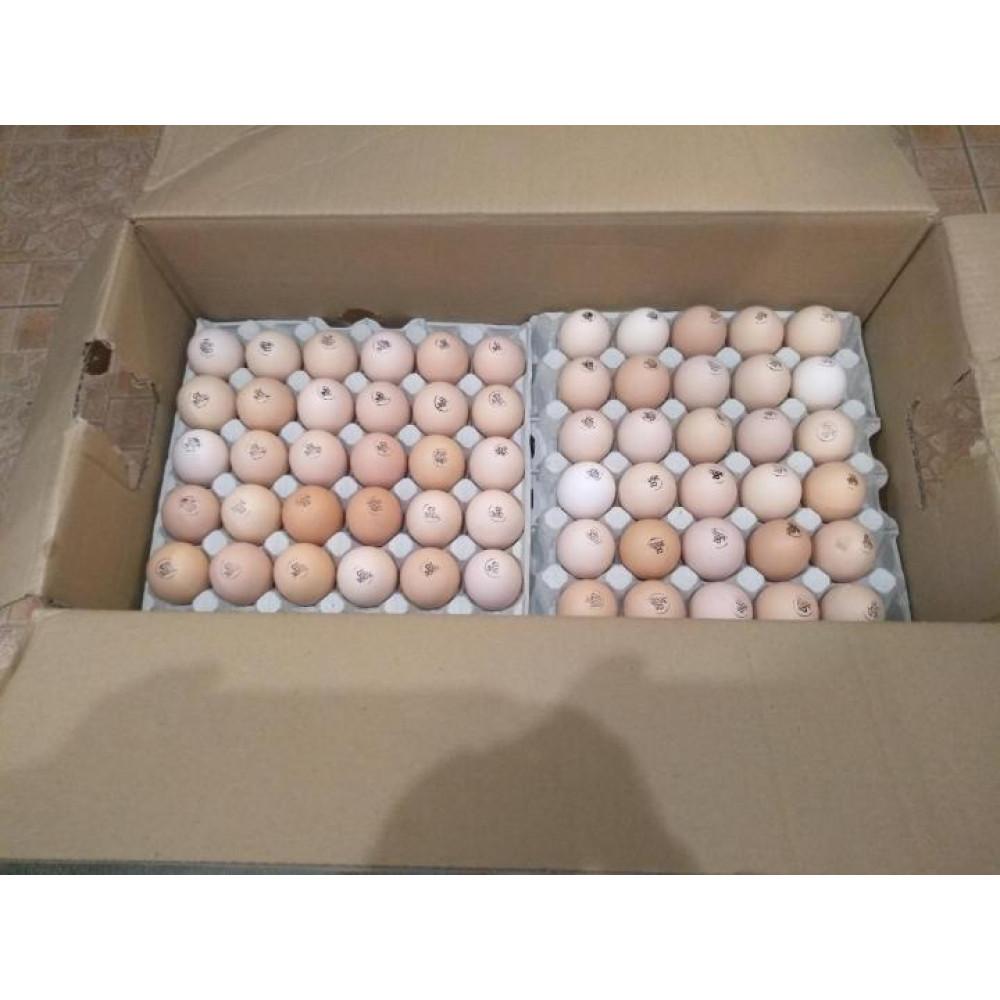 Инкубационное яйцо Бройлер Кобб 500